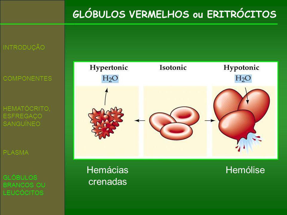 GLÓBULOS VERMELHOS ou ERITRÓCITOS COMPONENTES INTRODUÇÃO HEMATÓCRITO, ESFREGAÇO SANGUÍNEO GLÓBULOS BRANCOS OU LEUCÓCITOS PLASMA HemóliseHemácias crena