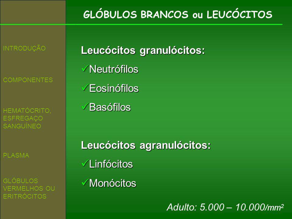 GLÓBULOS BRANCOS ou LEUCÓCITOS COMPONENTES INTRODUÇÃO HEMATÓCRITO, ESFREGAÇO SANGUÍNEO GLÓBULOS VERMELHOS OU ERITRÓCITOS PLASMA Leucócitos granulócito