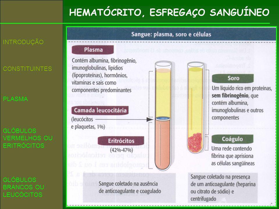 HEMATÓCRITO, ESFREGAÇO SANGUÍNEO CONSTITUINTES INTRODUÇÃO GLÓBULOS VERMELHOS OU ERITRÓCITOS PLASMA GLÓBULOS BRANCOS OU LEUCÓCITOS
