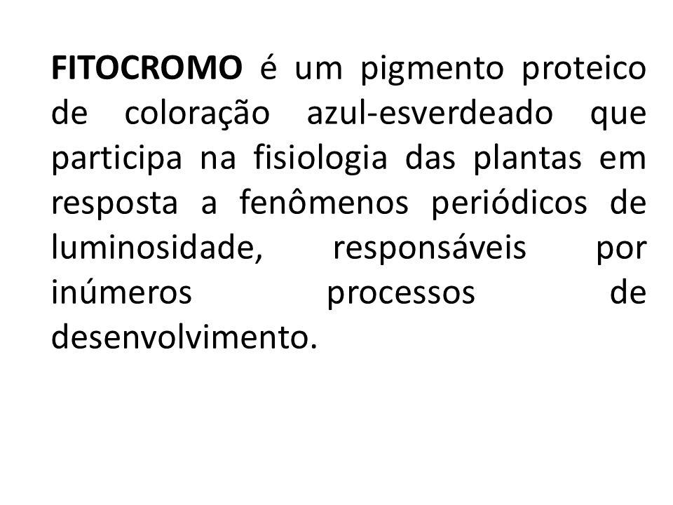 FITOCROMO é um pigmento proteico de coloração azul-esverdeado que participa na fisiologia das plantas em resposta a fenômenos periódicos de luminosida
