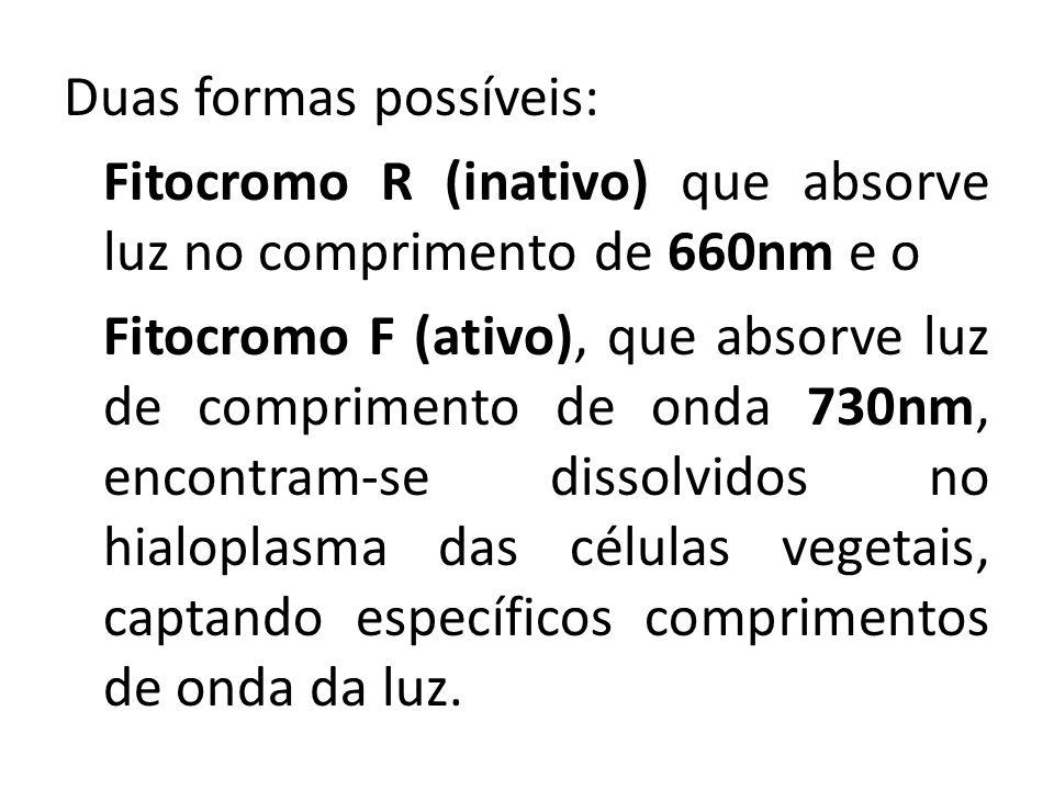 Duas formas possíveis: Fitocromo R (inativo) que absorve luz no comprimento de 660nm e o Fitocromo F (ativo), que absorve luz de comprimento de onda 7
