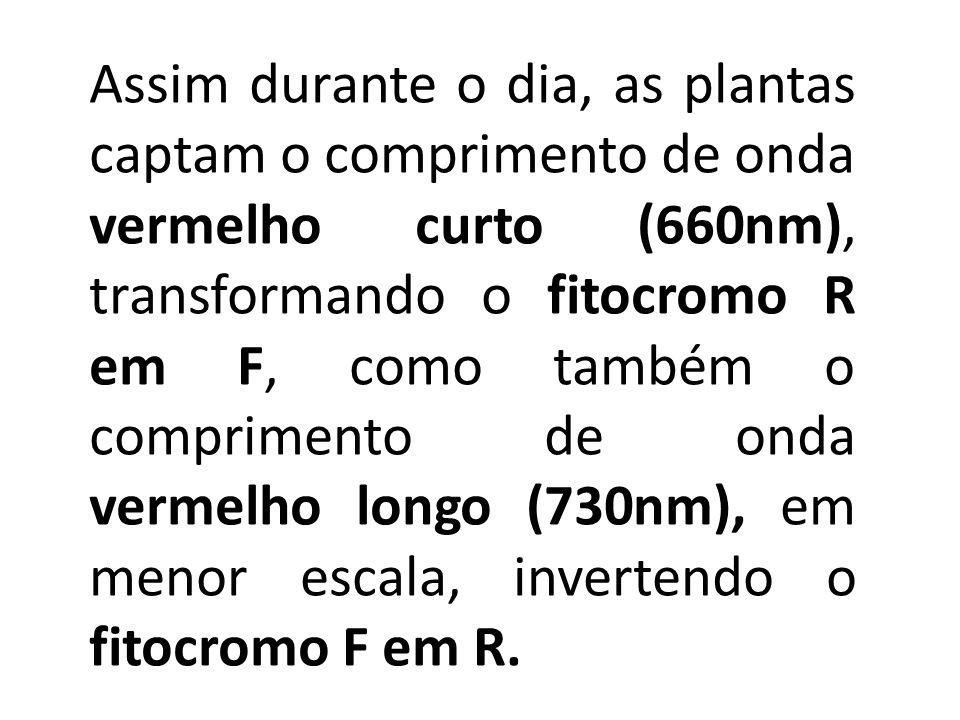Assim durante o dia, as plantas captam o comprimento de onda vermelho curto (660nm), transformando o fitocromo R em F, como também o comprimento de on