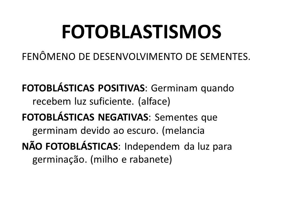 FOTOBLASTISMOS FENÔMENO DE DESENVOLVIMENTO DE SEMENTES. FOTOBLÁSTICAS POSITIVAS: Germinam quando recebem luz suficiente. (alface) FOTOBLÁSTICAS NEGATI