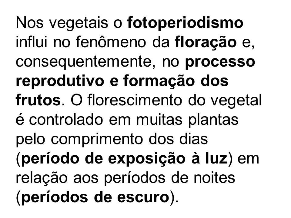 TROPISMOS Nos vegetais o fotoperiodismo influi no fenômeno da floração e, consequentemente, no processo reprodutivo e formação dos frutos. O florescim