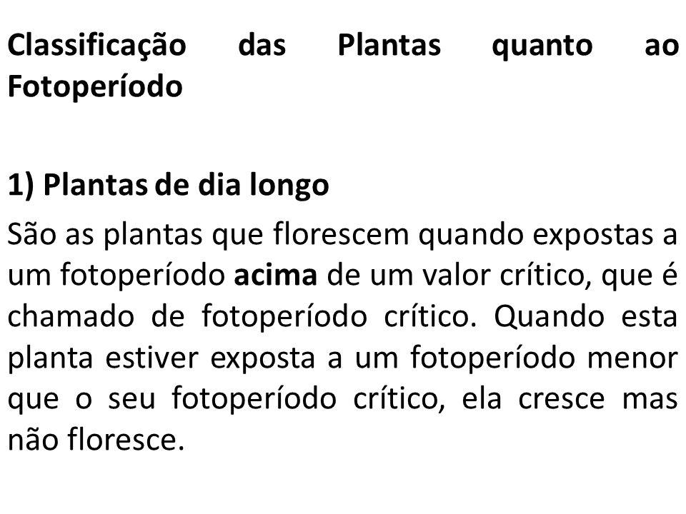 Classificação das Plantas quanto ao Fotoperíodo 1) Plantas de dia longo São as plantas que florescem quando expostas a um fotoperíodo acima de um valo