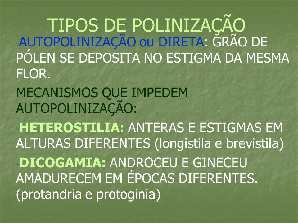 DIOICIA: OCORREM EM PLANTAS DIOICAS HERCOGAMIA: FLOR COM UMA BARREIRA NATURAL QIE IMPEDEM CONTATO ENTRE GRÃO DE PÓLEN E ESTIGMA AUTOINCOMPATIBILIDADE: HÁ INCOMPATIBILIDADE ENTRE GRÃO DE PÓLEN E CARPELO DA MESMA FLOR (grãos de pólen não germinam) POLINIZAÇÃO CRUZADA OU INDIRETA: POLINIZAÇÃO ENTRE FLORES DIFERENTES *MAIS VANTAJOSA DO PONTO DE VISTA EVOLUTIVO (DÁ VARIABILIDADE GENÉTICA) *HÁ AGENTES POLINIZADORES