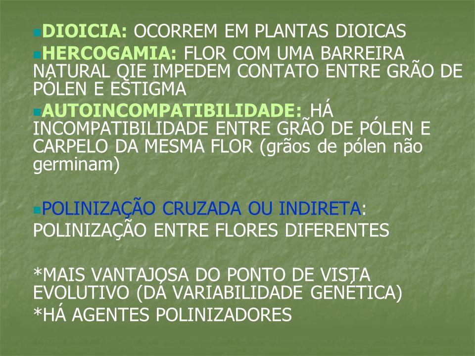 TIPOS DE POLINIZAÇÃO ANEMÓFILA: REALIZADA PELO VENTO -COMUM EM GRAMÍNEAS E GIMNOSPERMAS -FLORES: -POUCO VISTOSAS -APERIANTADAS -INODORAS -SEM NÉCTAR -DIOICAS (na maioria) -ESTAMES E ESTIGMAS BEM EVIDENTES -PRODUZEM MUITOS GRÃOS DE PÓLEN -NÃO É MUITO EFICIENTE -EXEMPLOS: TRIGO, GRAMÍNEAS E GIMNOSPERMAS