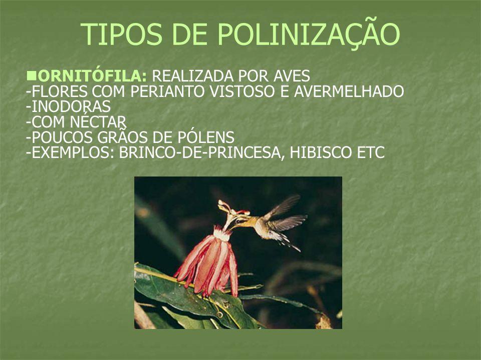 TIPOS DE POLINIZAÇÃO ENTOMÓFILA: Realizada por insetos.