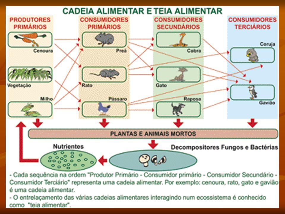 FLUXO DE ENERGIA CARACTERÍSTICAS PRINCIPAIS DO FLUXO DE ENERGIA NO ECOSSISTEMA CARACTERÍSTICAS PRINCIPAIS DO FLUXO DE ENERGIA NO ECOSSISTEMA Sol é a principal fonte de energia.