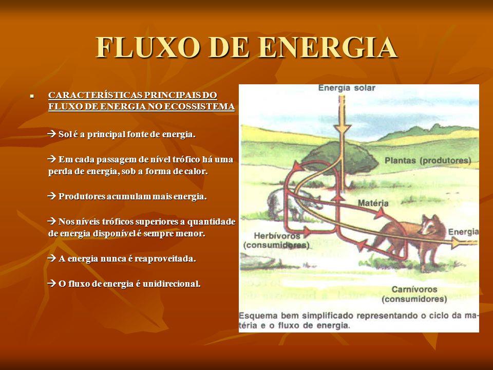 FLUXO DE ENERGIA CARACTERÍSTICAS PRINCIPAIS DO FLUXO DE ENERGIA NO ECOSSISTEMA CARACTERÍSTICAS PRINCIPAIS DO FLUXO DE ENERGIA NO ECOSSISTEMA Sol é a p