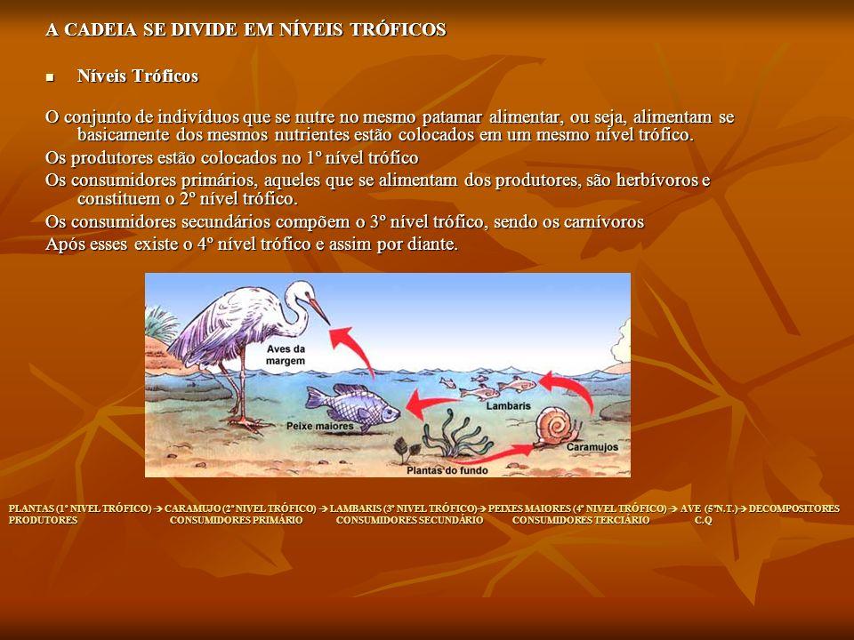 PLANTAS (1º NIVEL TRÓFICO) CARAMUJO (2º NIVEL TRÓFICO) LAMBARIS (3º NIVEL TRÓFICO) PEIXES MAIORES (4º NIVEL TRÓFICO) AVE (5ºN.T.) DECOMPOSITORES PRODU