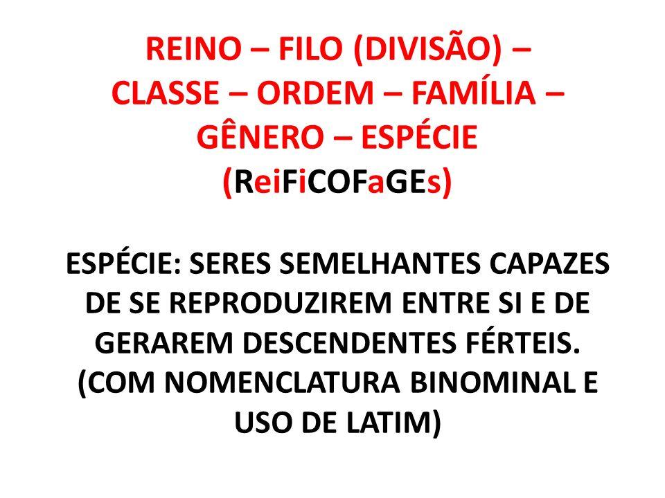 REINO MONERA Número de células: Unicelulares (isoladas ou coloniais) Tipo de célula: Procariontes Nutrição: Autótrofos ou heterótrofos Subdividi-se em: Eubactérias (Bactérias e Cianobactérias) Arqueobactérias (Arquea)