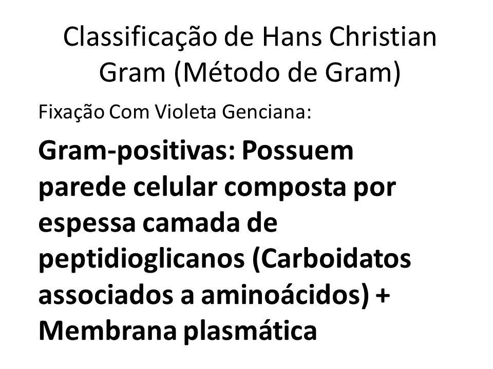 Gram-negativas: Possuem uma membrana lipoproteica externa com lipopolissacarídeos + camada de peptídeoglicanos + membrana plasmática Menos permeáveis a passagem de antibióticos (mais patogênicas)