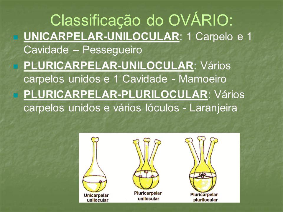 Classifica ç ão do OVÁRIO: UNICARPELAR-UNILOCULAR: 1 Carpelo e 1 Cavidade – Pessegueiro PLURICARPELAR-UNILOCULAR: Vários carpelos unidos e 1 Cavidade