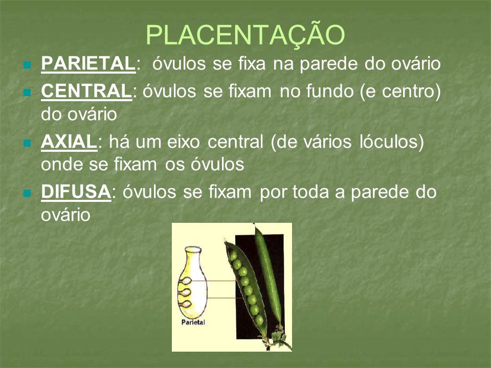 PLACENTAÇÃO PARIETAL: óvulos se fixa na parede do ovário CENTRAL: óvulos se fixam no fundo (e centro) do ovário AXIAL: há um eixo central (de vários l