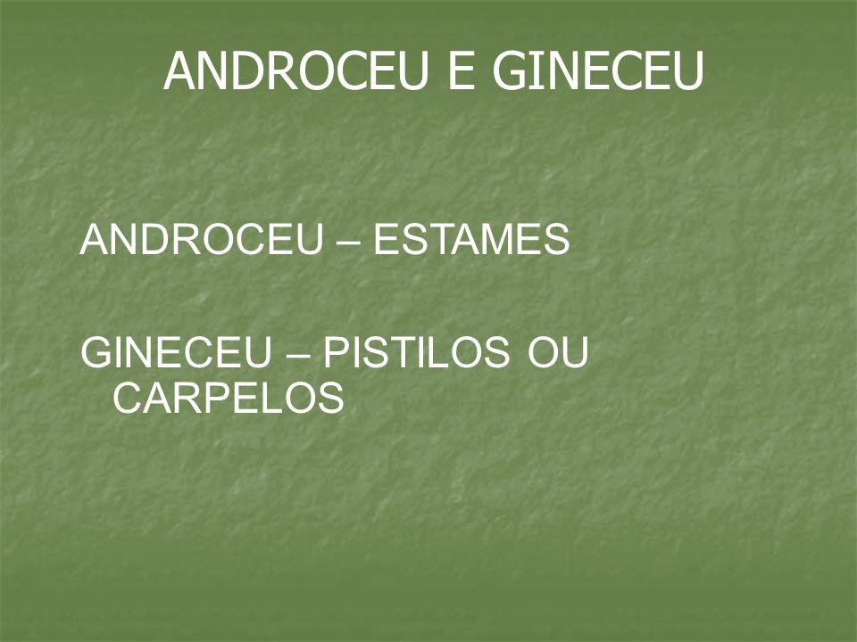 ANDROCEU E GINECEU ANDROCEU – ESTAMES GINECEU – PISTILOS OU CARPELOS