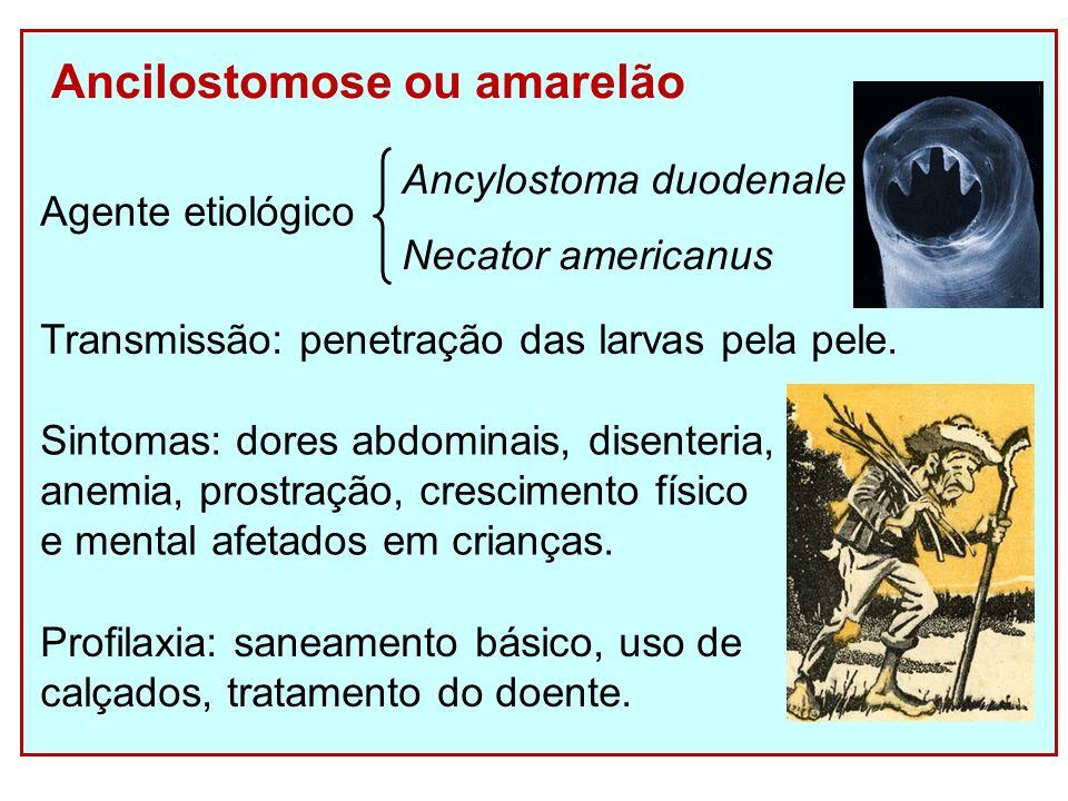 Ancilostomose ou amarelão Transmissão: penetração das larvas pela pele.