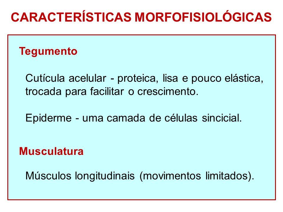 CARACTERÍSTICAS MORFOFISIOLÓGICAS Tegumento Cutícula acelular - proteica, lisa e pouco elástica, trocada para facilitar o crescimento.