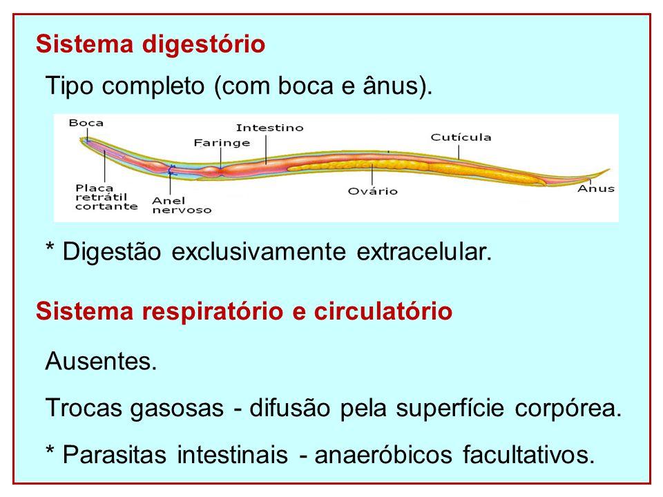 Sistema digestório * Digestão exclusivamente extracelular.