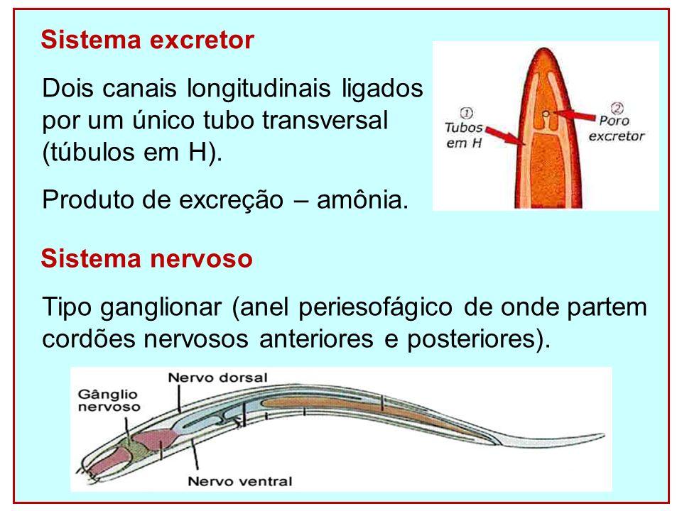 REPRODUÇÃO Dioicos com dimorfismo sexual (machos menores, cauda em forma de gancho e espículas penianas).