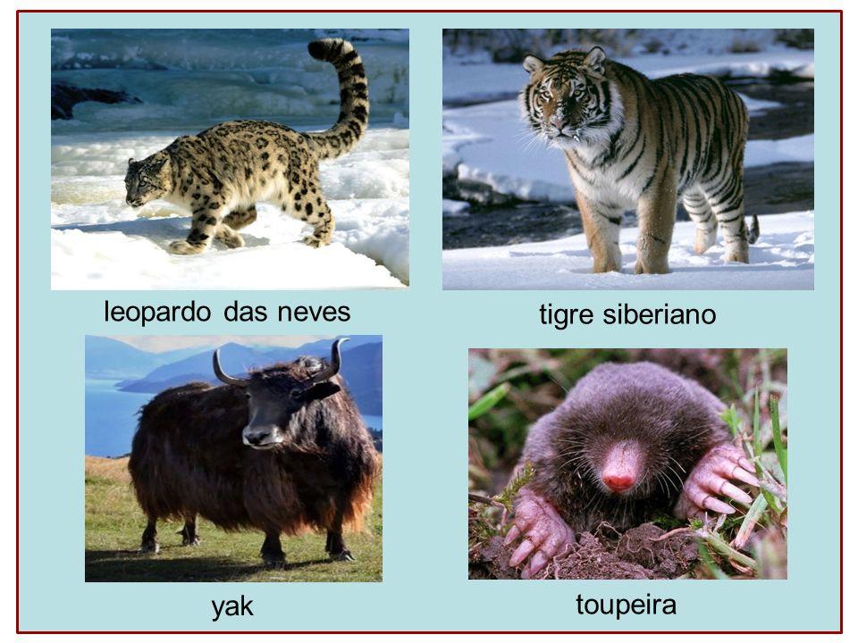 leopardo das neves tigre siberiano toupeira yak