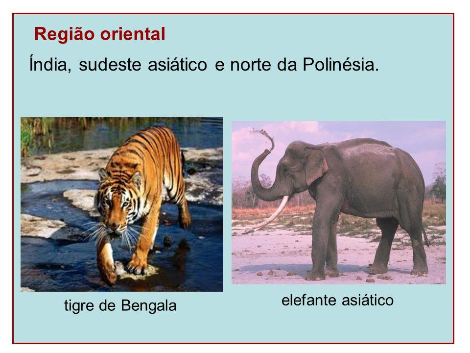 Região oriental Índia, sudeste asiático e norte da Polinésia. tigre de Bengala elefante asiático