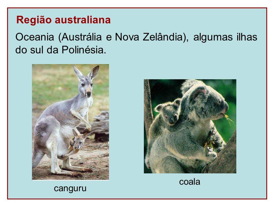 Região australiana Oceania (Austrália e Nova Zelândia), algumas ilhas do sul da Polinésia. canguru coala