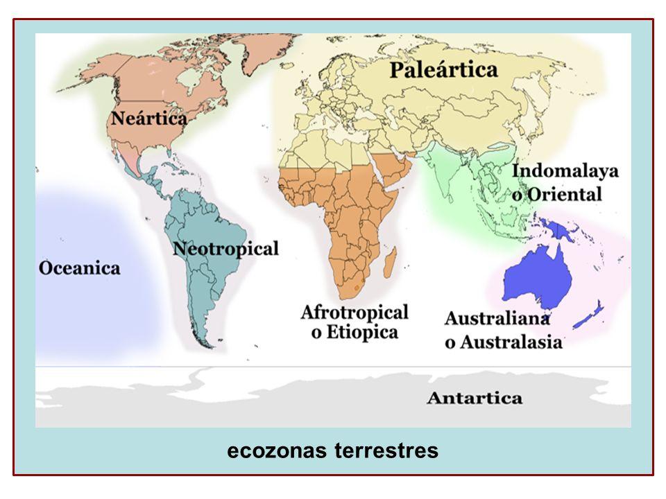 Classificação das espécies quanto a distribuição geográfica Cosmopolita – são aquelas que ocorrem em todas as regiões (baratas, ratos, homem...).
