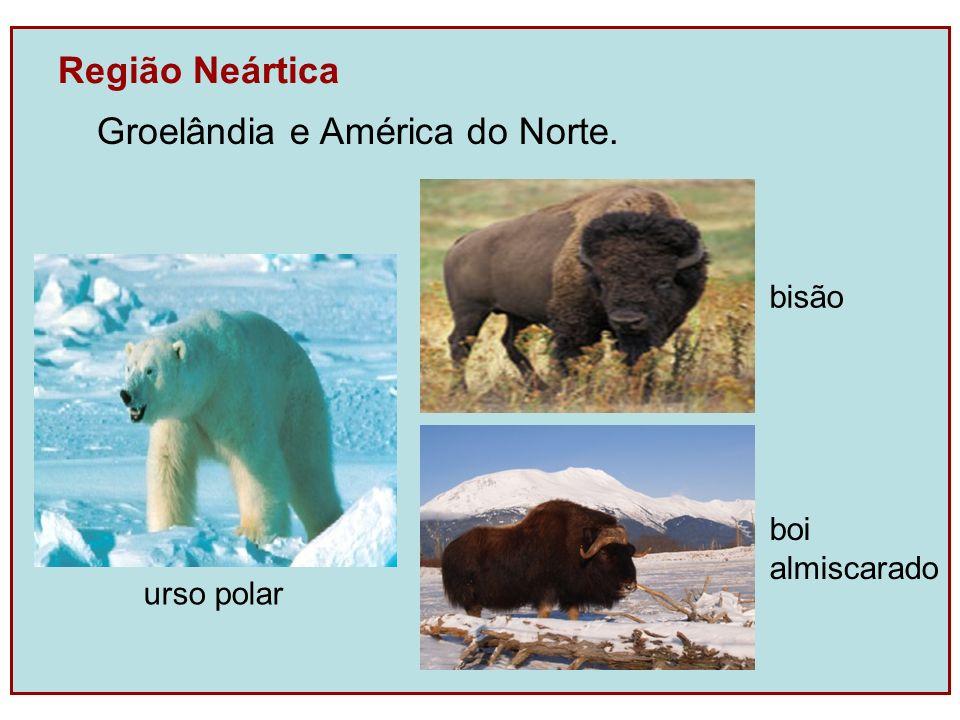 Região Neártica Groelândia e América do Norte. bisão boi almiscarado urso polar
