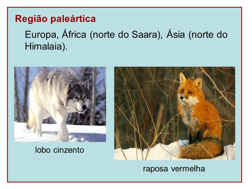 Região paleártica Europa, África (norte do Saara), Ásia (norte do Himalaia). raposa vermelha lobo cinzento