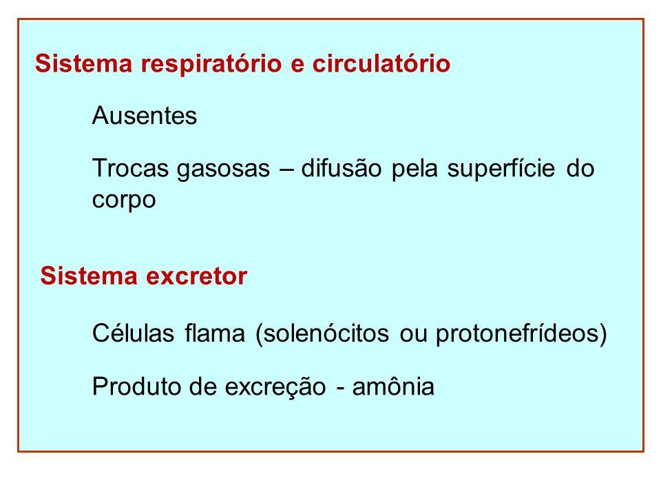 Sistema respiratório e circulatório Ausentes Trocas gasosas – difusão pela superfície do corpo Sistema excretor Células flama (solenócitos ou protonef