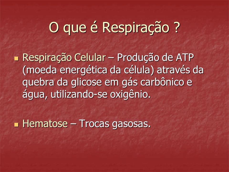 Gas carbonico 9% dissolvido no plasma 27% combinado a hemoglobina (carboemoglobina) 64% sob a forma de bicarbonato CO 2 CO 2 + H 2 O H 2 CO 3 HCO 3 - H+H+ HHb Anidrase carbonica