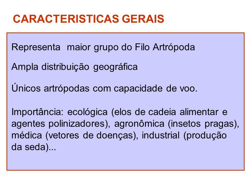 CARACTERISTICAS GERAIS Representa maior grupo do Filo Artrópoda Ampla distribuição geográfica Únicos artrópodas com capacidade de voo. Importância: ec