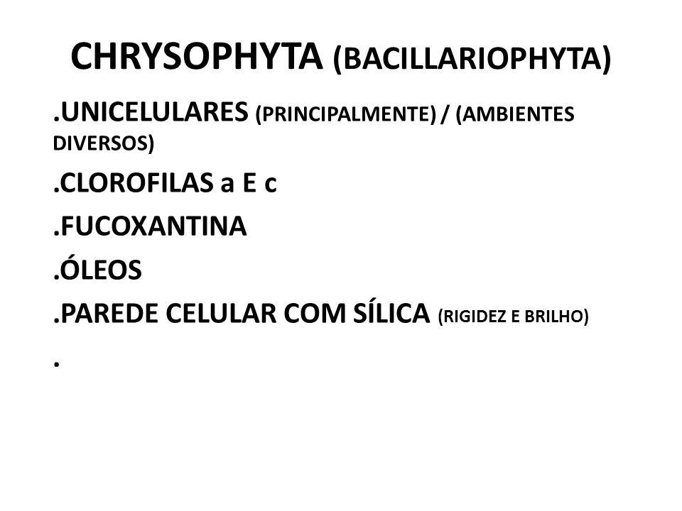 CHRYSOPHYTA (BACILLARIOPHYTA).UNICELULARES (PRINCIPALMENTE) / (AMBIENTES DIVERSOS).CLOROFILAS a E c.FUCOXANTINA.ÓLEOS.PAREDE CELULAR COM SÍLICA (RIGID