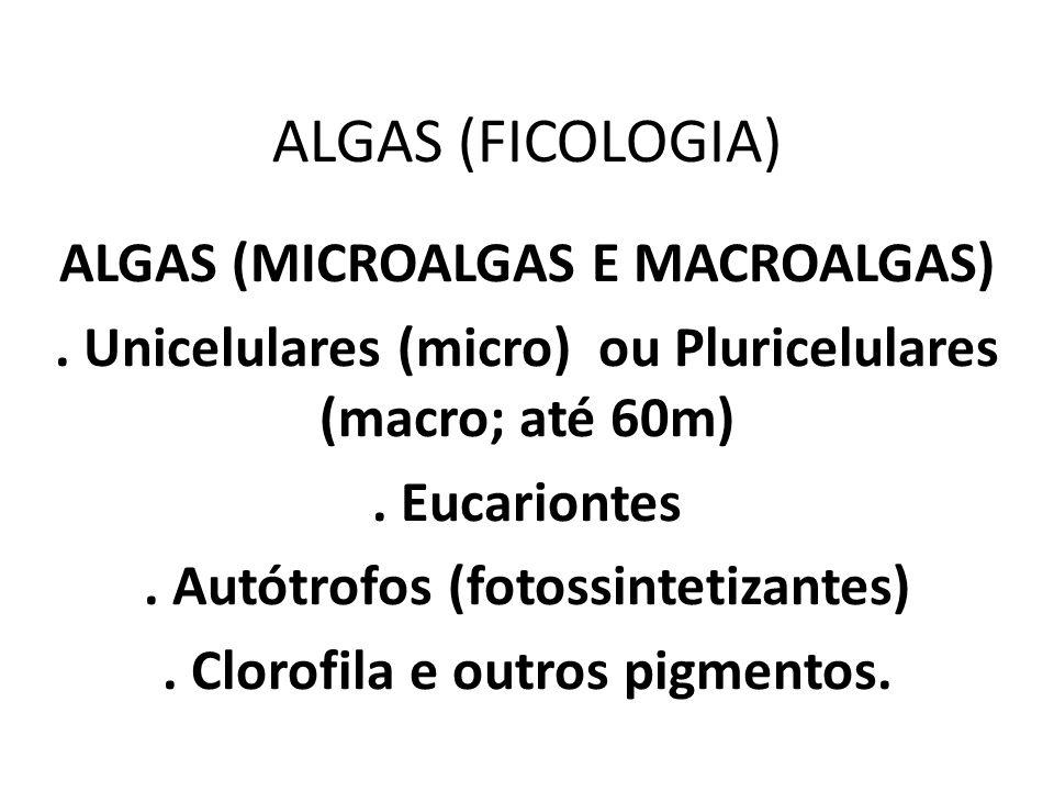 ALGAS (FICOLOGIA) ALGAS (MICROALGAS E MACROALGAS). Unicelulares (micro) ou Pluricelulares (macro; até 60m). Eucariontes. Autótrofos (fotossintetizante