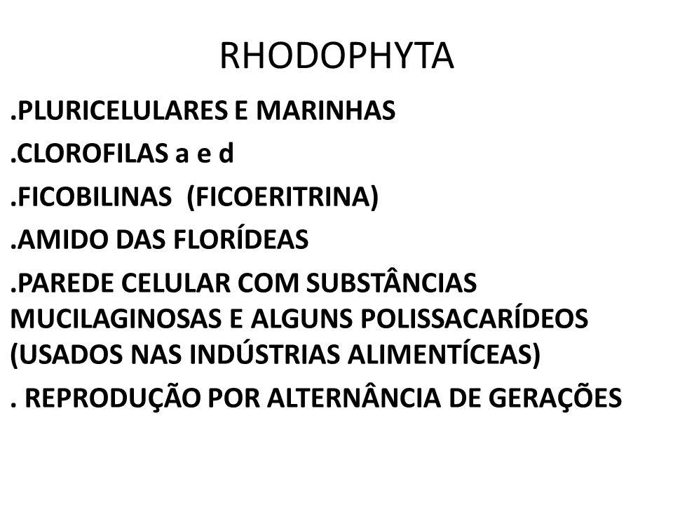 RHODOPHYTA.PLURICELULARES E MARINHAS.CLOROFILAS a e d.FICOBILINAS (FICOERITRINA).AMIDO DAS FLORÍDEAS.PAREDE CELULAR COM SUBSTÂNCIAS MUCILAGINOSAS E AL