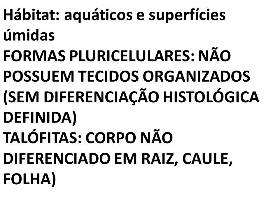 Hábitat: aquáticos e superfícies úmidas FORMAS PLURICELULARES: NÃO POSSUEM TECIDOS ORGANIZADOS (SEM DIFERENCIAÇÃO HISTOLÓGICA DEFINIDA) TALÓFITAS: COR