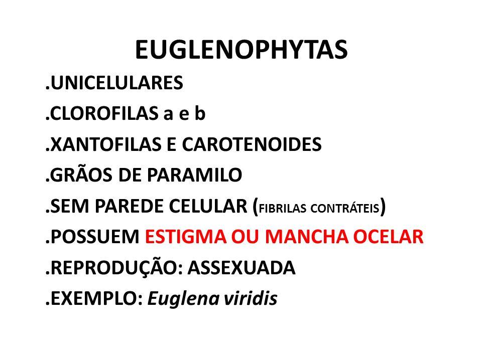 EUGLENOPHYTAS.UNICELULARES.CLOROFILAS a e b.XANTOFILAS E CAROTENOIDES.GRÃOS DE PARAMILO.SEM PAREDE CELULAR ( FIBRILAS CONTRÁTEIS ).POSSUEM ESTIGMA OU