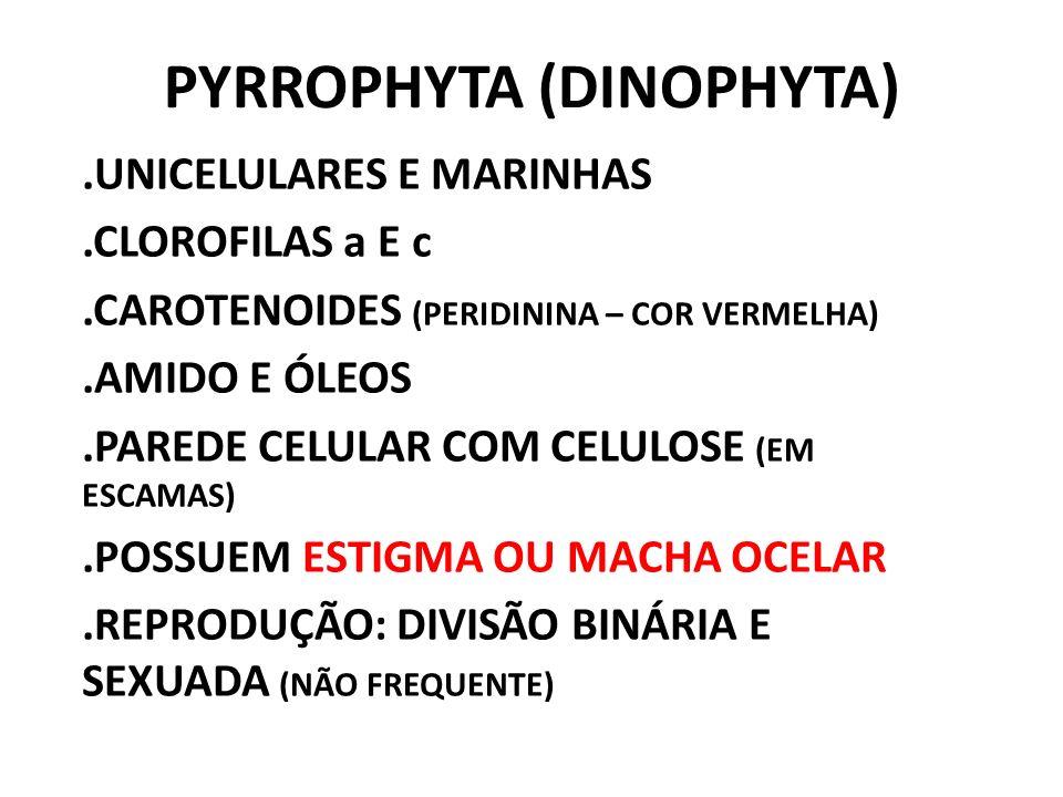 PYRROPHYTA (DINOPHYTA).UNICELULARES E MARINHAS.CLOROFILAS a E c.CAROTENOIDES (PERIDININA – COR VERMELHA).AMIDO E ÓLEOS.PAREDE CELULAR COM CELULOSE (EM