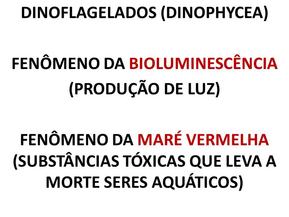 DINOFLAGELADOS (DINOPHYCEA) FENÔMENO DA BIOLUMINESCÊNCIA (PRODUÇÃO DE LUZ) FENÔMENO DA MARÉ VERMELHA (SUBSTÂNCIAS TÓXICAS QUE LEVA A MORTE SERES AQUÁT
