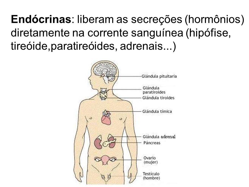 Endócrinas: liberam as secreções (hormônios) diretamente na corrente sanguínea (hipófise, tireóide,paratireóides, adrenais...)
