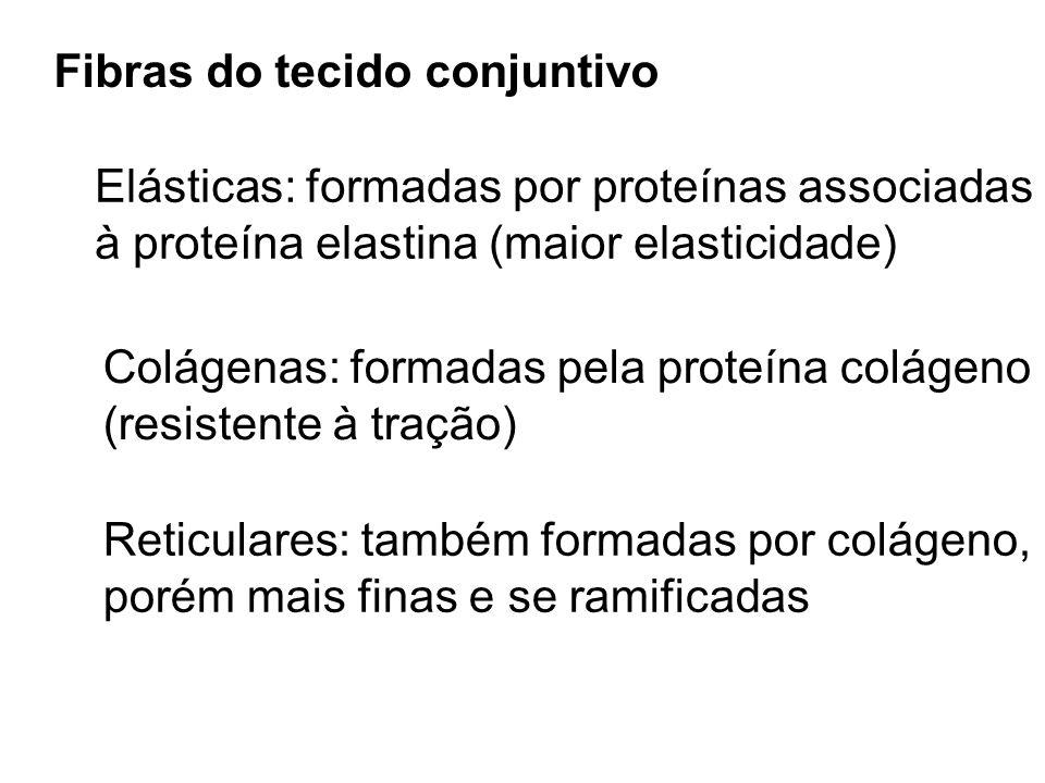Fibras do tecido conjuntivo Elásticas: formadas por proteínas associadas à proteína elastina (maior elasticidade) Colágenas: formadas pela proteína co