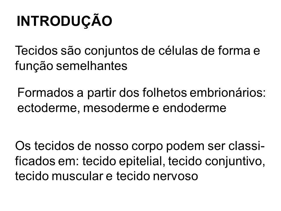 Tecidos são conjuntos de células de forma e função semelhantes INTRODUÇÃO Formados a partir dos folhetos embrionários: ectoderme, mesoderme e endoderm