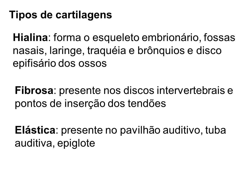 Tipos de cartilagens Hialina: forma o esqueleto embrionário, fossas nasais, laringe, traquéia e brônquios e disco epifisário dos ossos Fibrosa: presen