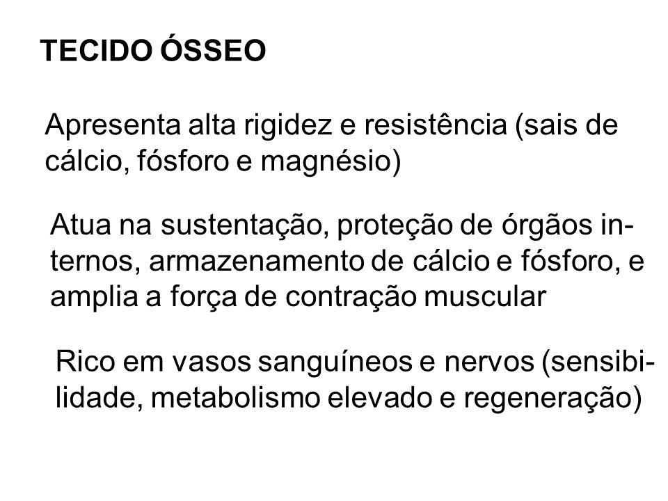 TECIDO ÓSSEO Apresenta alta rigidez e resistência (sais de cálcio, fósforo e magnésio) Atua na sustentação, proteção de órgãos in- ternos, armazenamen