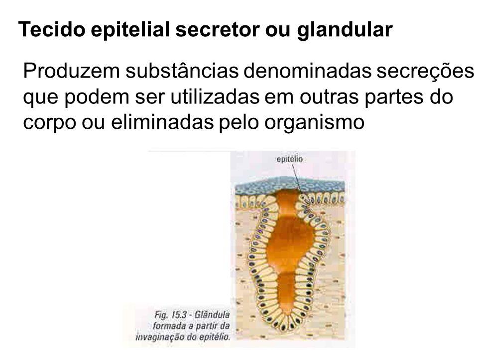 Tecido epitelial secretor ou glandular Produzem substâncias denominadas secreções que podem ser utilizadas em outras partes do corpo ou eliminadas pel