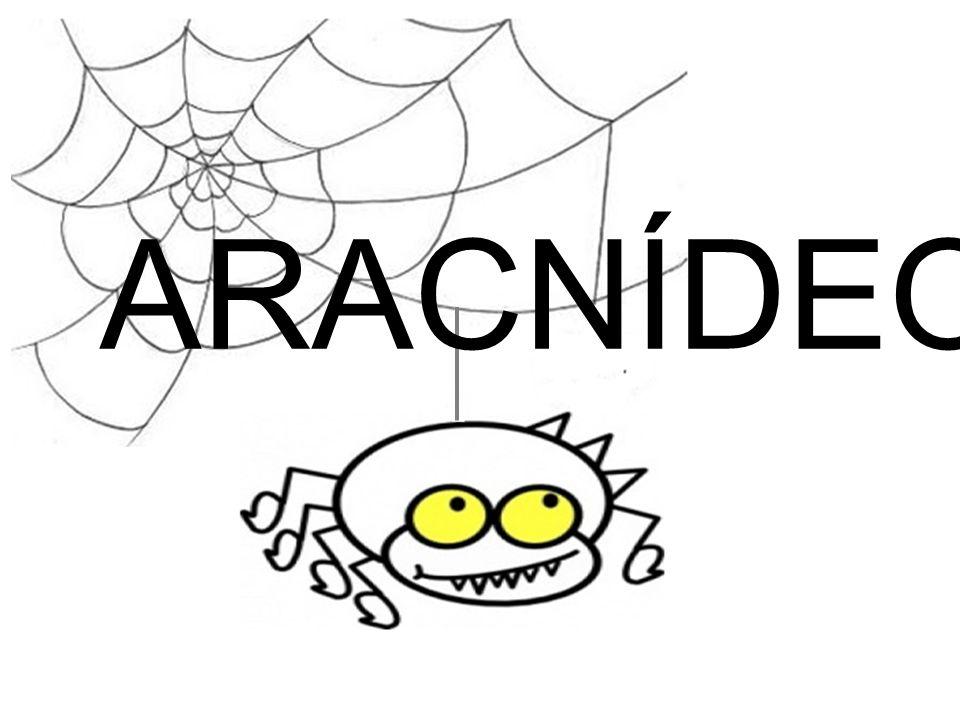 Acasalamento de aranhas