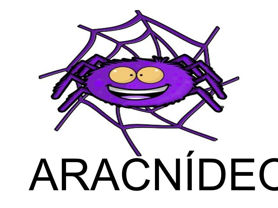 CLASSIFICAÇÃO Ordem Araneida (aranhas) Tarântula (Dugesiella sp.) Aranha de jardim – Lycosa sp.