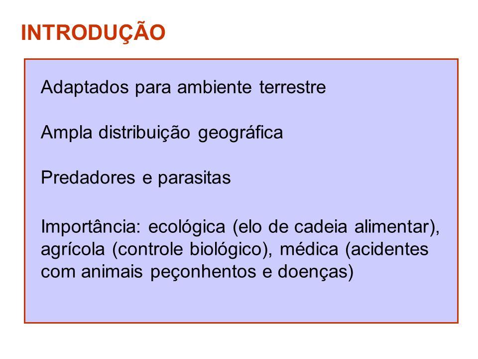 DIVISÃO DO CORPO Cefalotórax (prossoma) Olhos simples (seis a oito) Quelíceras (peças bucais) Pedipalpos (função sensitiva, alimentar e reprodutiva) 4 pares de patas Obs: não apresentam antenas (áceros)
