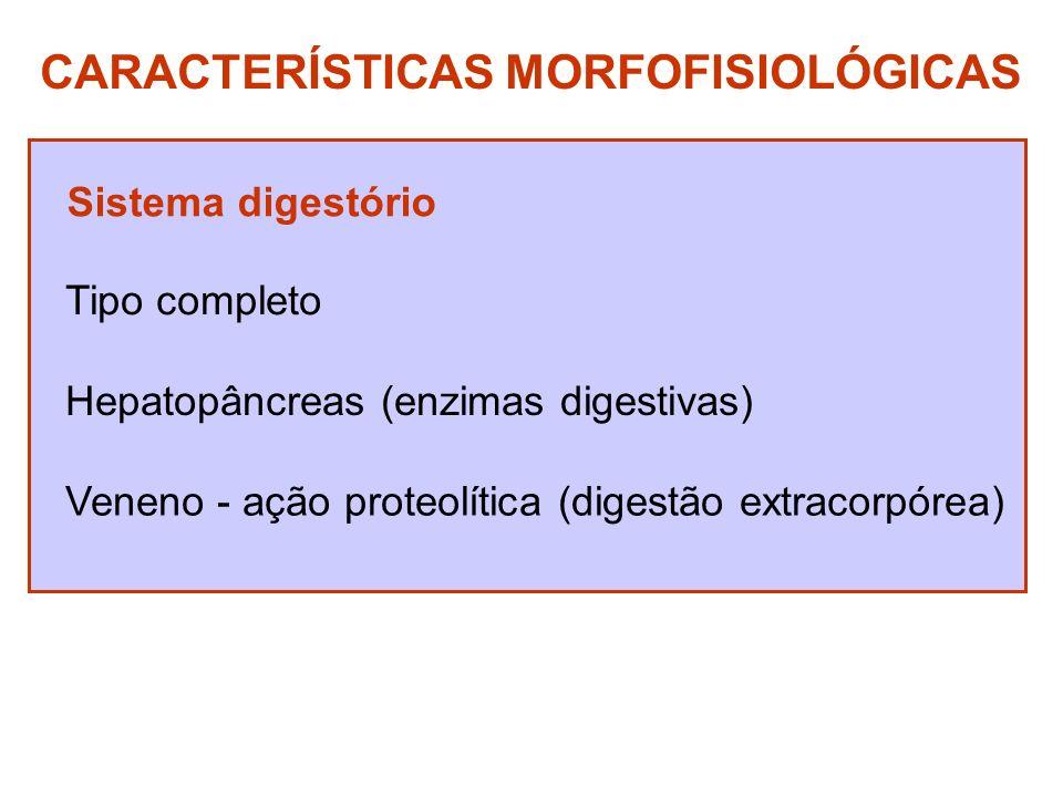 CARACTERÍSTICAS MORFOFISIOLÓGICAS Sistema digestório Tipo completo Hepatopâncreas (enzimas digestivas) Veneno - ação proteolítica (digestão extracorpó